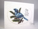 Bluejay-Christmas-Cards.jpg